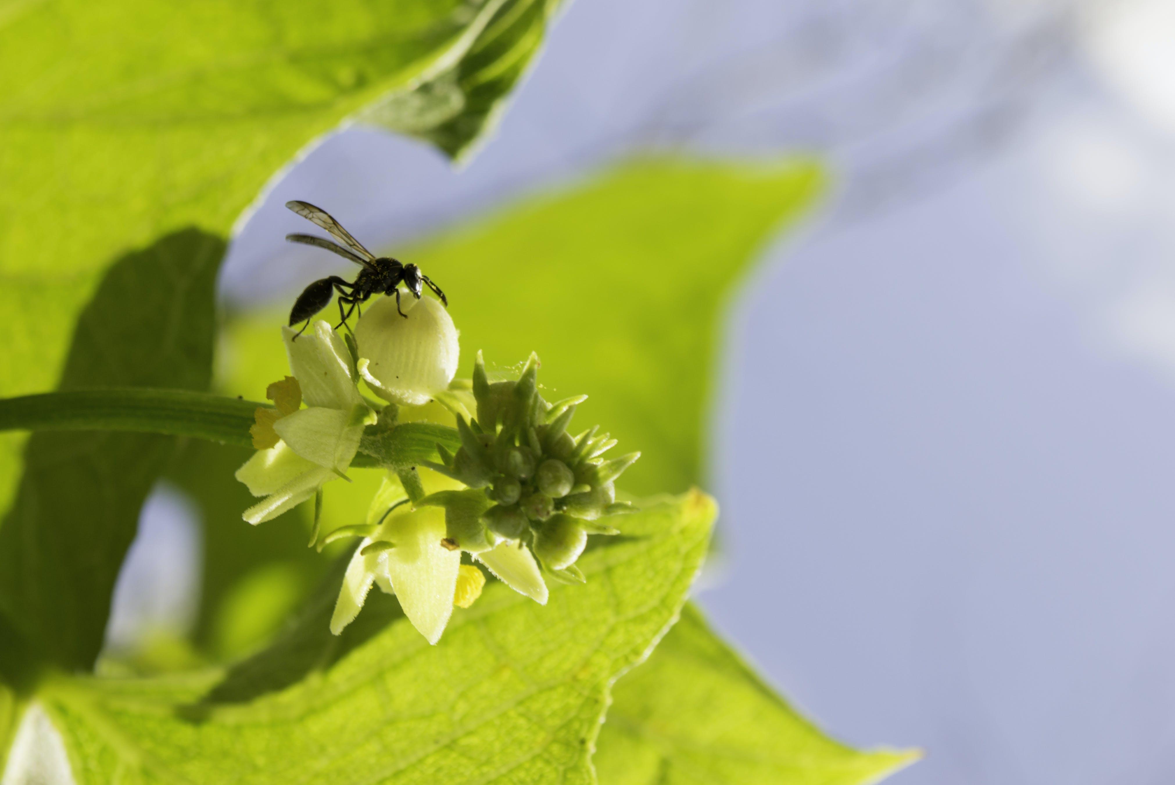 天性, 昆蟲, 綠色, 黃蜂 的 免費圖庫相片