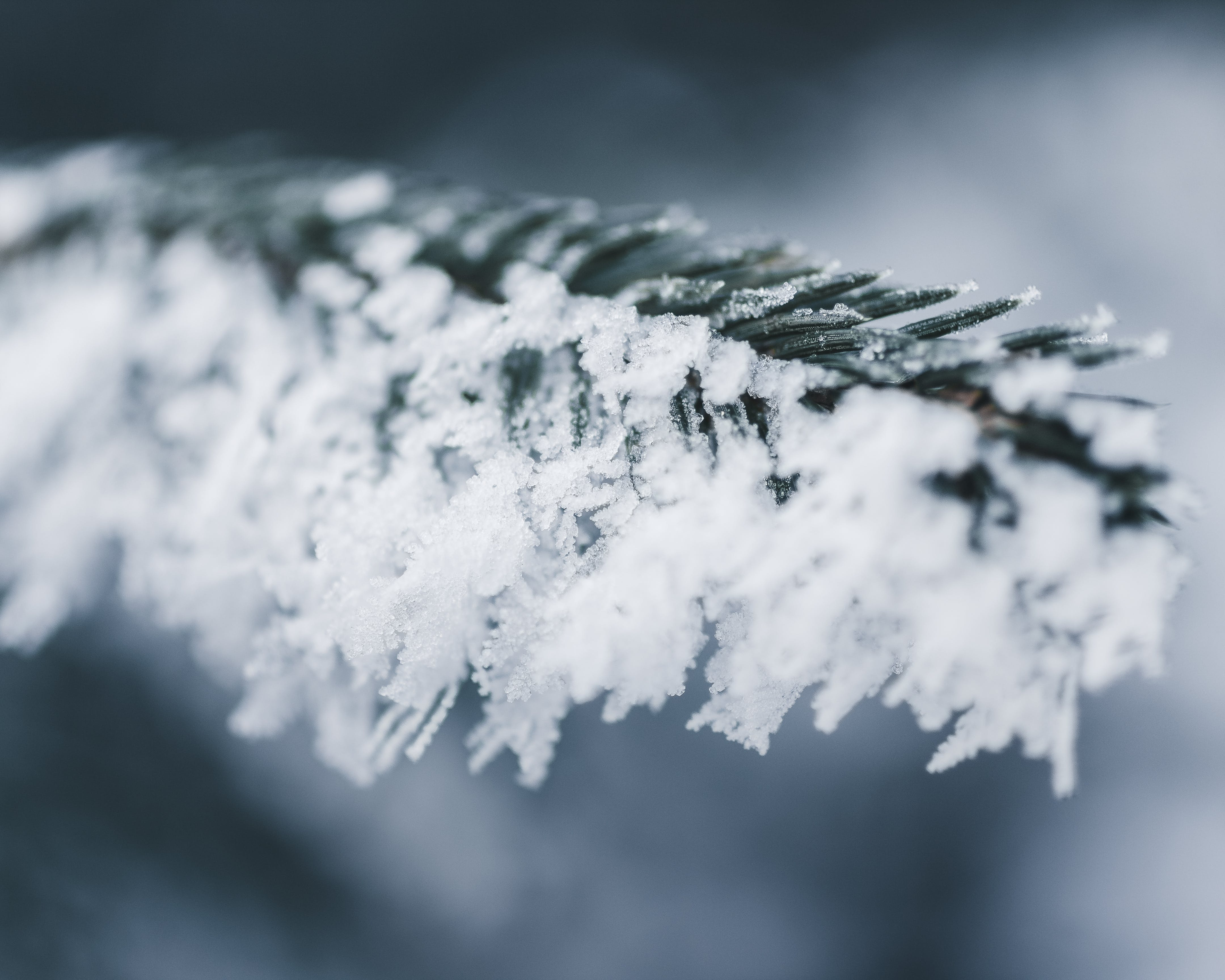 Close-up Photo Of Snow Covered Branch