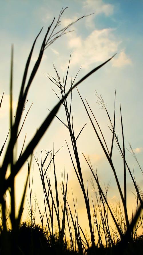 Immagine gratuita di alto, campo d'erba, indonesia, luce del sole