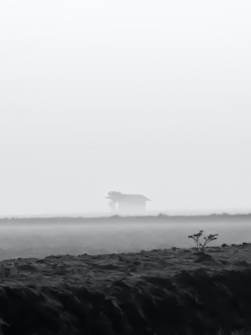 Immagine gratuita di bianco e nero, campo di riso, indonesia, nebbioso