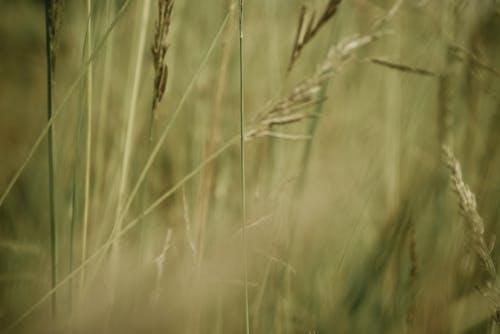 Immagine gratuita di campo, concentrarsi, erba, foto