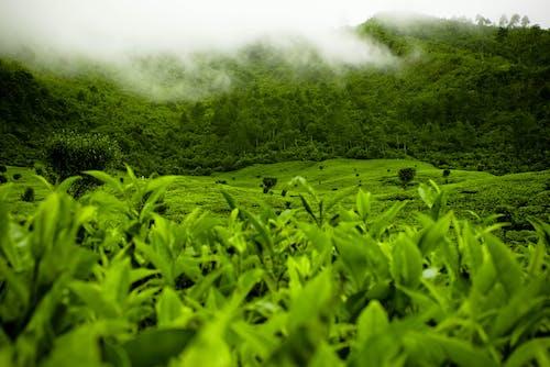 Immagine gratuita di bianco, campo, cloud, foresta
