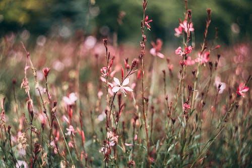 Gratis arkivbilde med åker, blomster, blomstre, farge