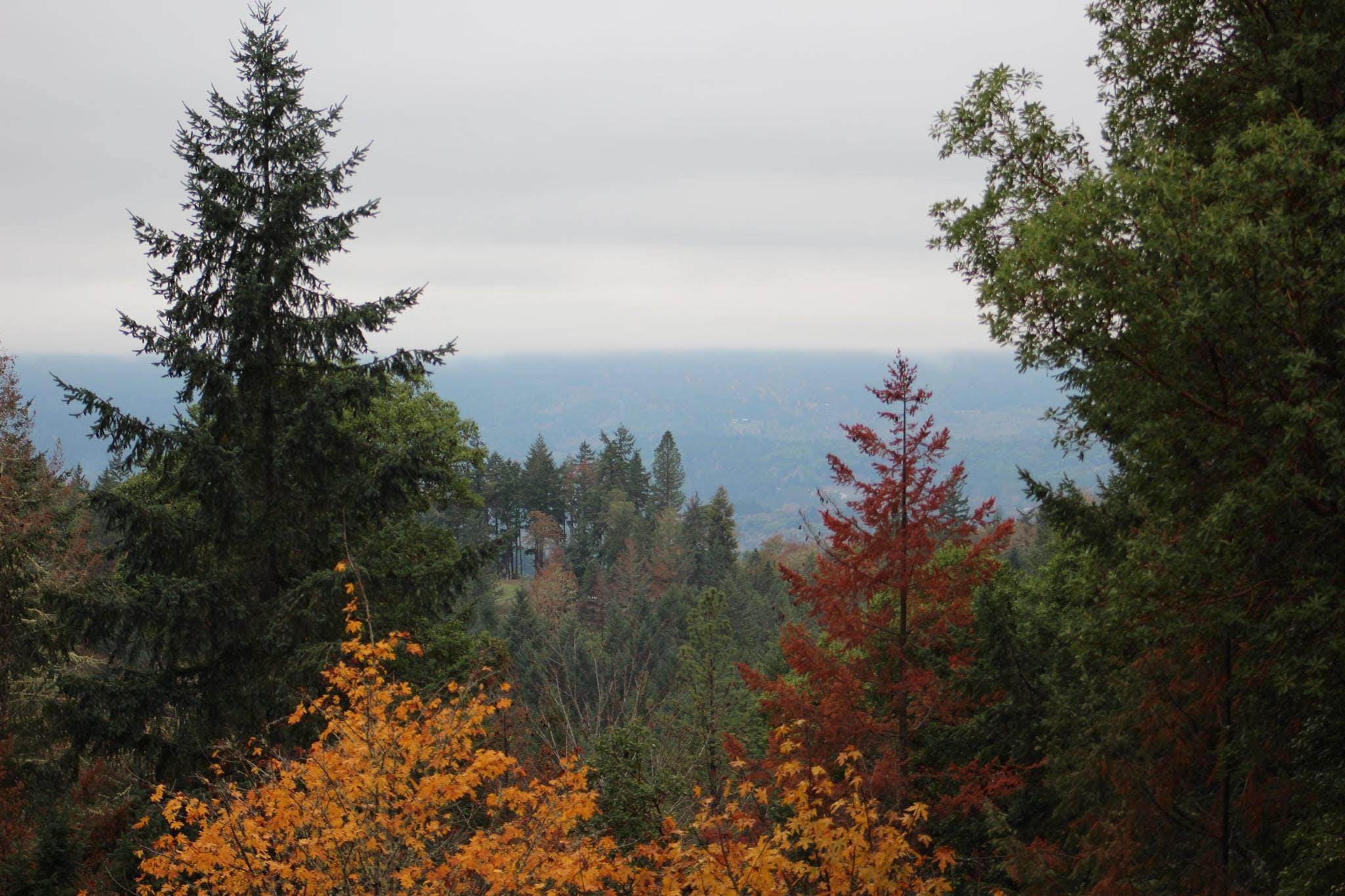 Free stock photo of bird's eye view, front, mountain, yard