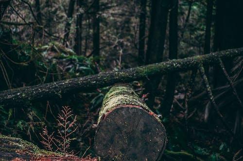 Fotos de stock gratuitas de abril, Árbol caído, arboles, árboles caídos