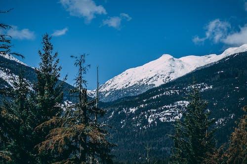 Fotos de stock gratuitas de arboles, Canadá, cielo azul, cima