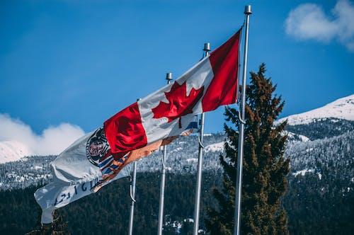 Fotos de stock gratuitas de arboles, asta de bandera, bandera de canadá, Canadá