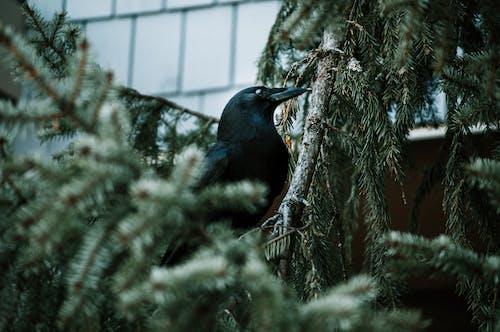 Fotos de stock gratuitas de animal, animal salvaje, árbol, concentrarse