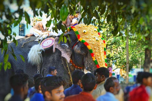Free stock photo of elephant, hindu, region
