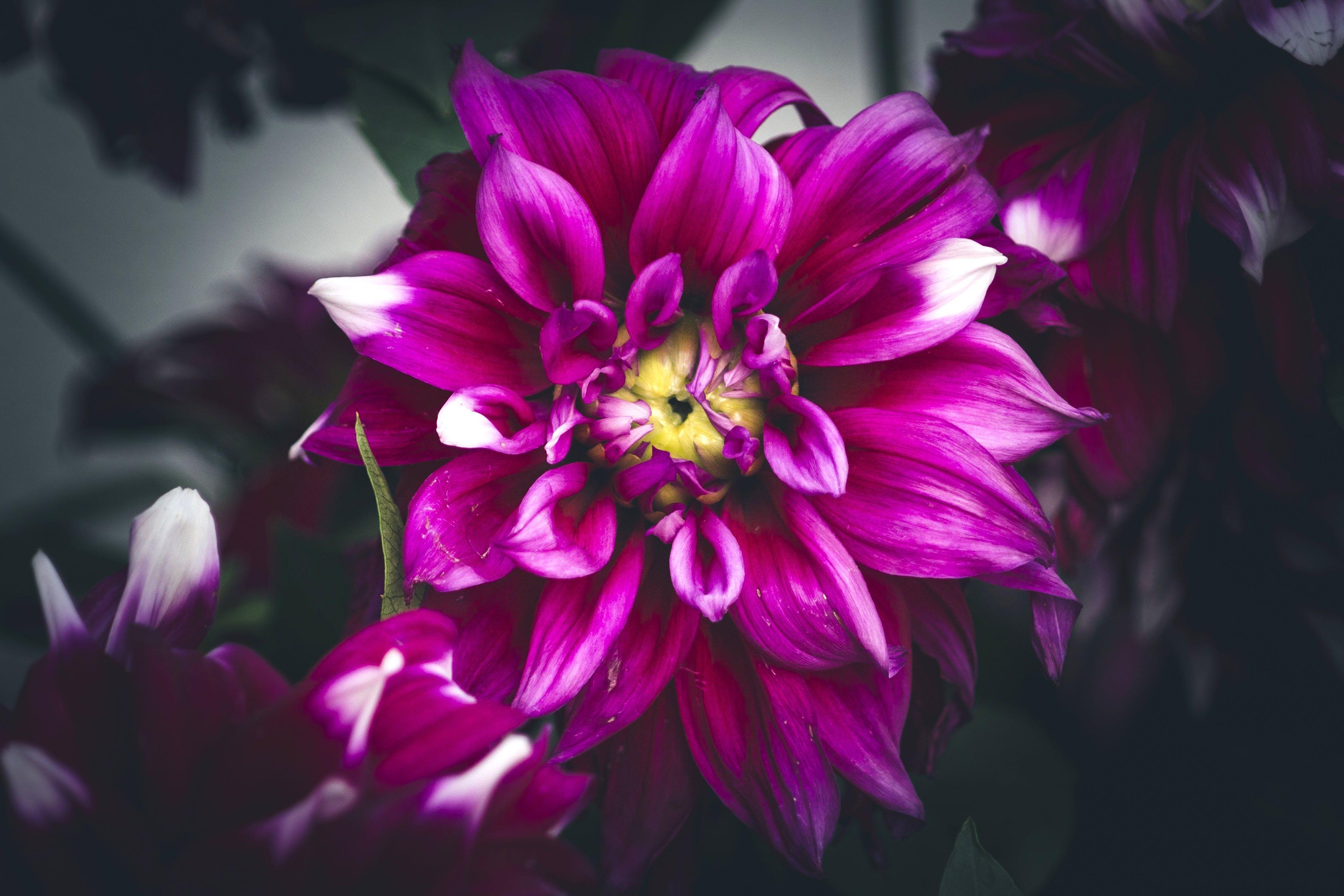 flower, park, snap