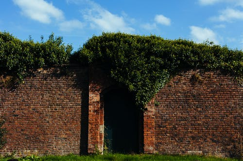 Brown Brick Wall Surrounded With Green Plant