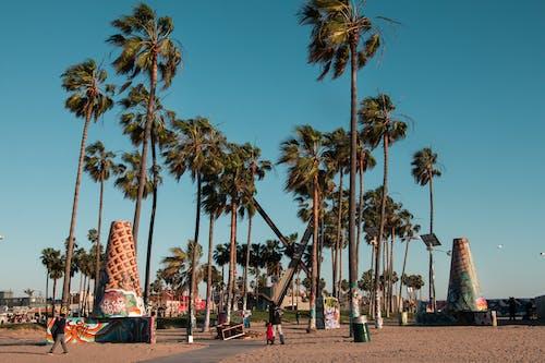 Základová fotografie zdarma na téma jasná obloha, městský, pláž, stromy