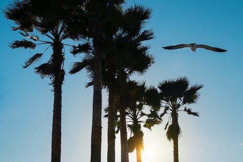 Immagine gratuita di alberi, cielo pulito, palme, spiaggia