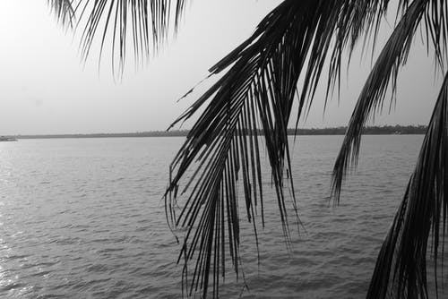 Free stock photo of calm waters, nature, nature photography, palm