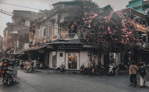 Ingyenes stockfotó #vietnami, Hanoi, utca, virág témában