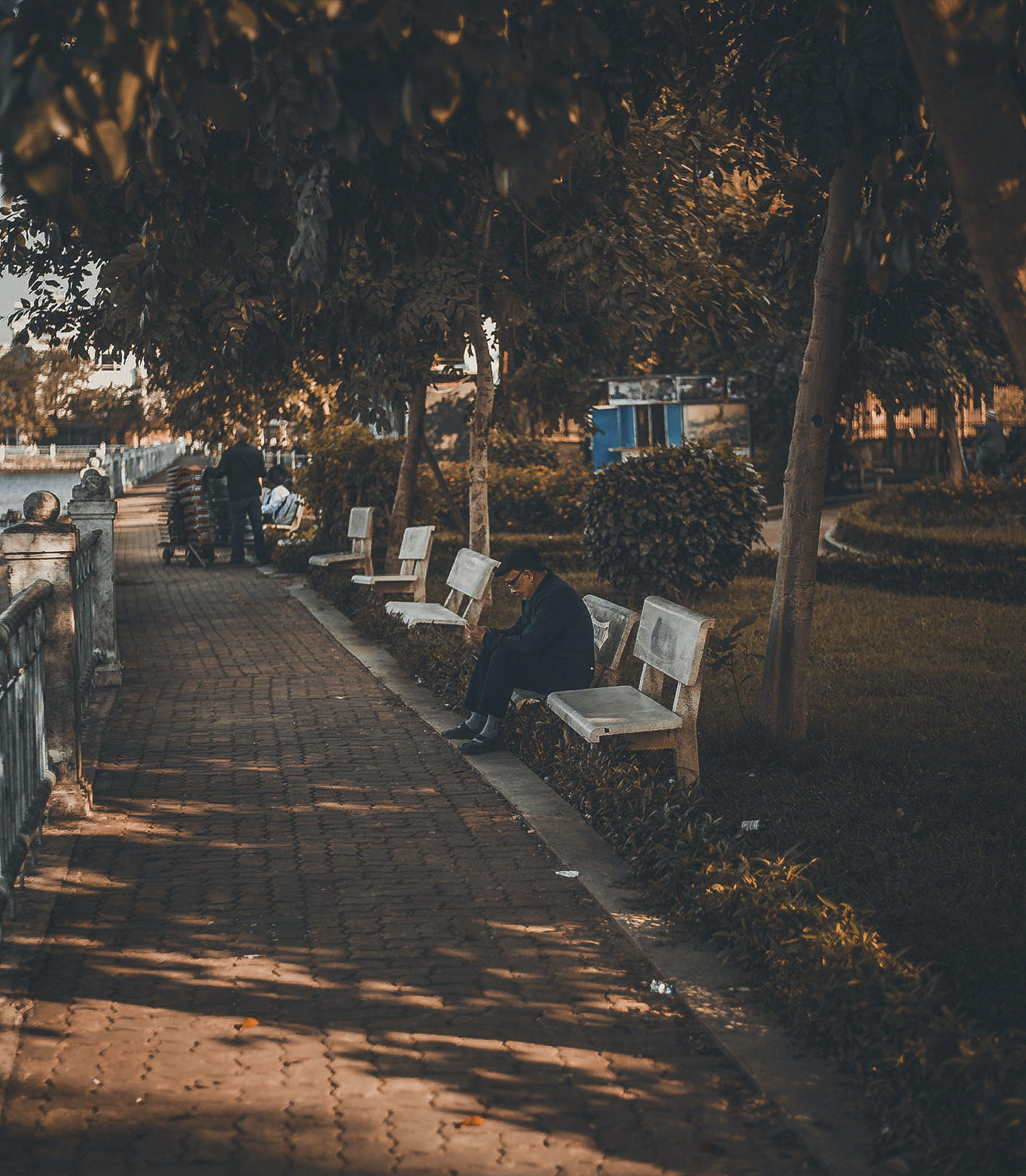 Fotos de stock gratuitas de anciano, bancos, hombre, parque