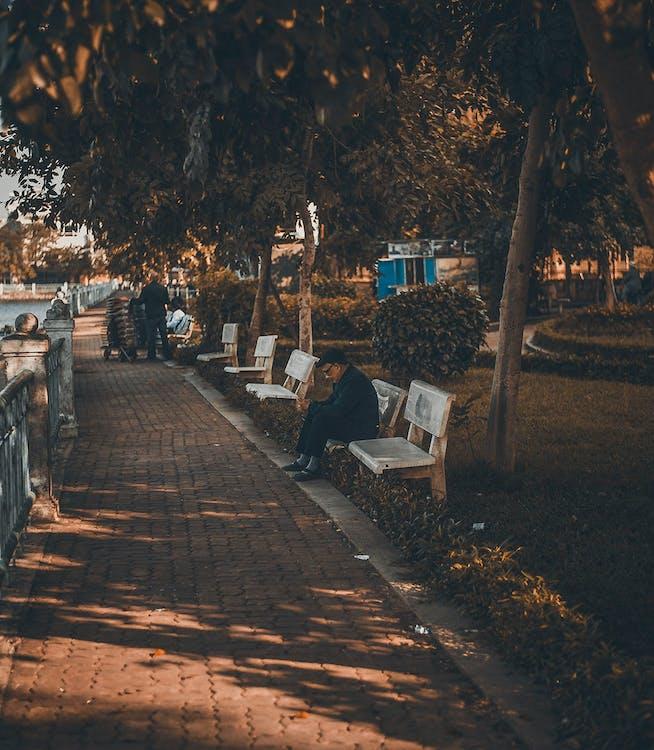 اْنسان، جلسة، عن، مقعد الحديقة