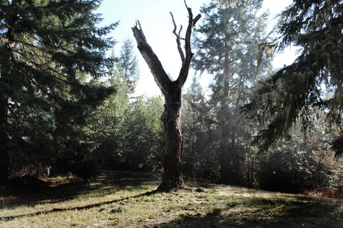 Free stock photo of oak, tree