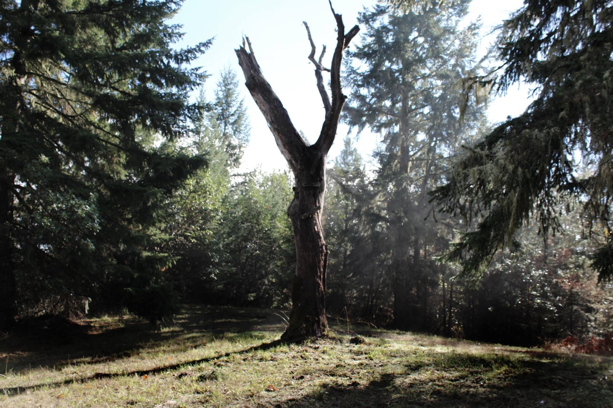 Baum Alt