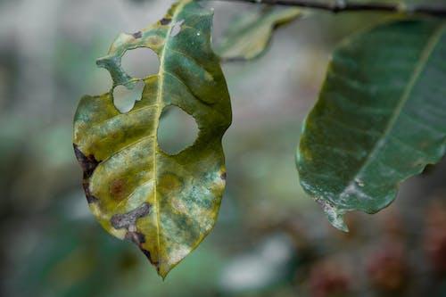 廠, 枯葉, 綠葉, 花園 的 免費圖庫相片