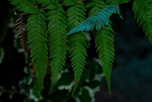 碼, 綠色, 綠葉, 花園 的 免費圖庫相片