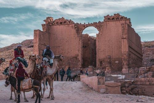 Ilmainen kuvapankkikuva tunnisteilla Adobe Photoshop, Jordan, kameli, maisema