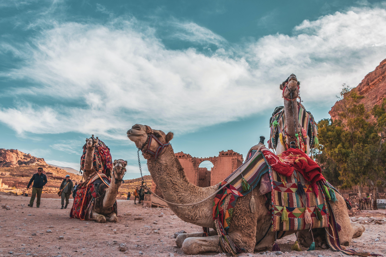 Free stock photo of baduian, camel, clouds, jordan