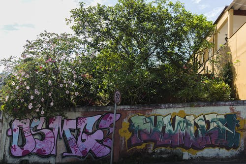Photos gratuites de arbre en fleur, art, arts de la rue, bombe de peinture