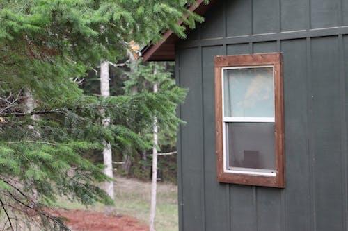 オレゴン, 森林の無料の写真素材