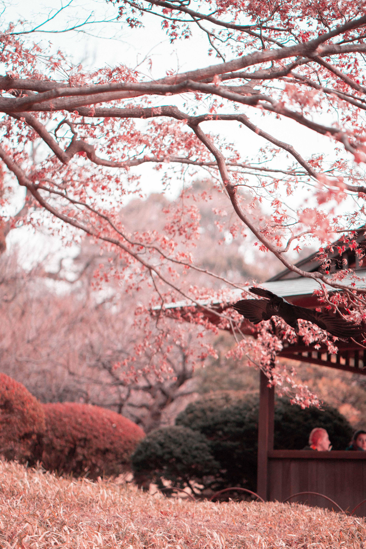 Fotos de stock gratuitas de árbol, bonito, cerezos en flor, concentrarse