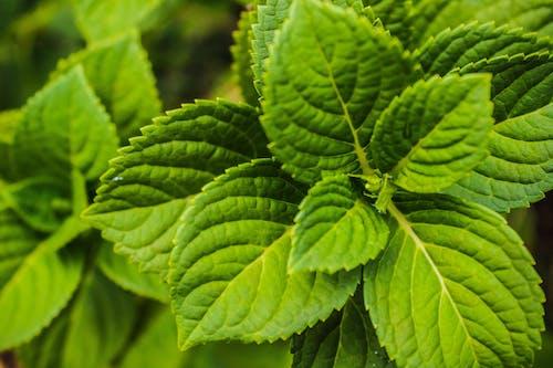 Fotos de stock gratuitas de flora, fondo, jardín, jardín botánico
