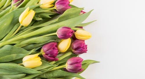 Fotos de stock gratuitas de flor, flores, Flores de primavera, fondo