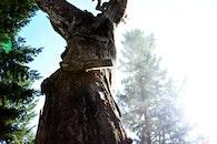 tree, old, oak