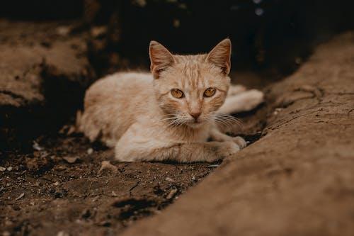Ilmainen kuvapankkikuva tunnisteilla ikuistaa, katu, keltainen, kissa