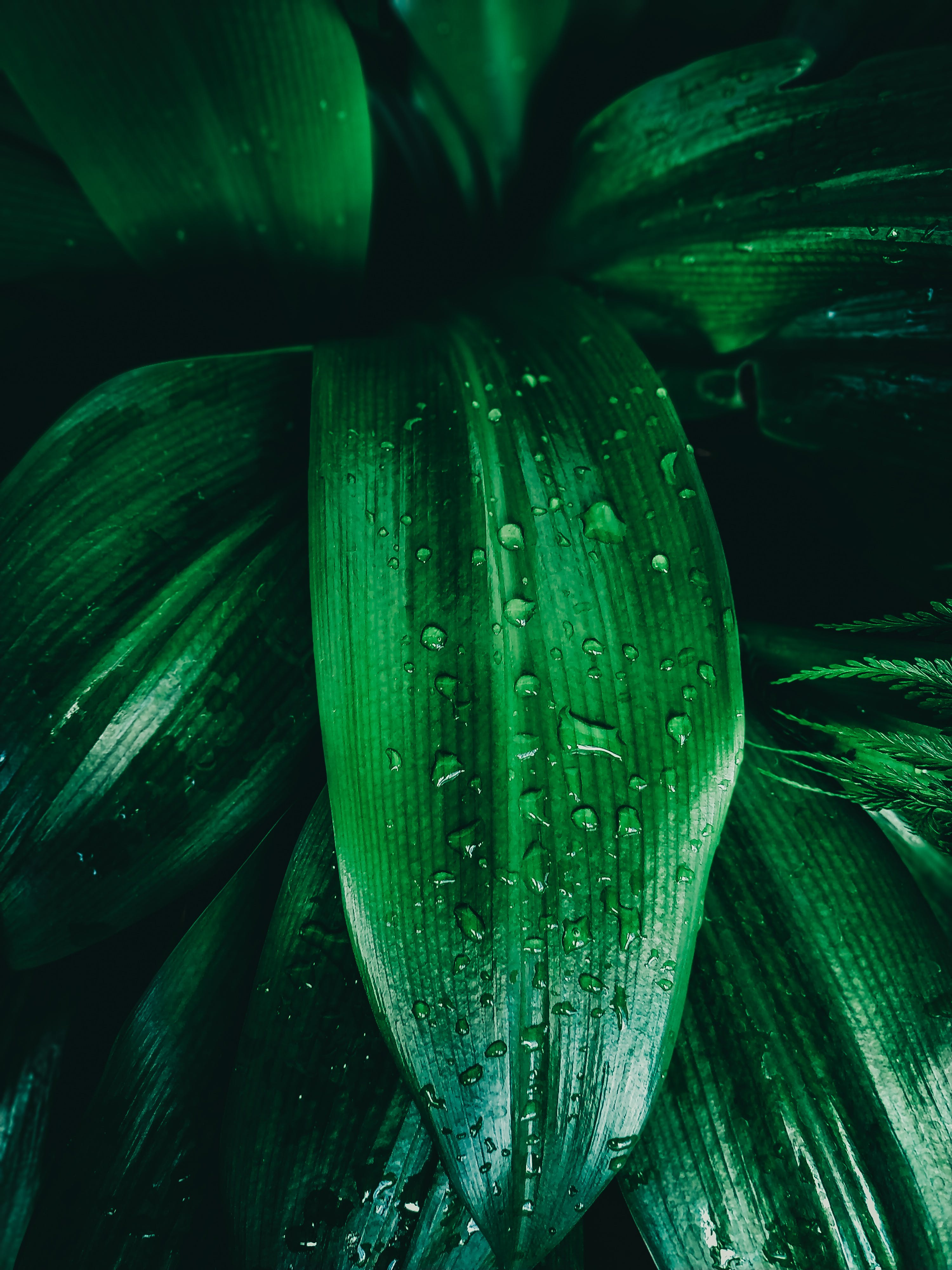 Close-up Photography of Green Leaf With Water Dew