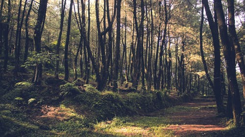 Free stock photo of adventure, forest, nature
