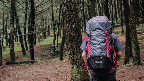 Free stock photo of adventure, mountain, nature