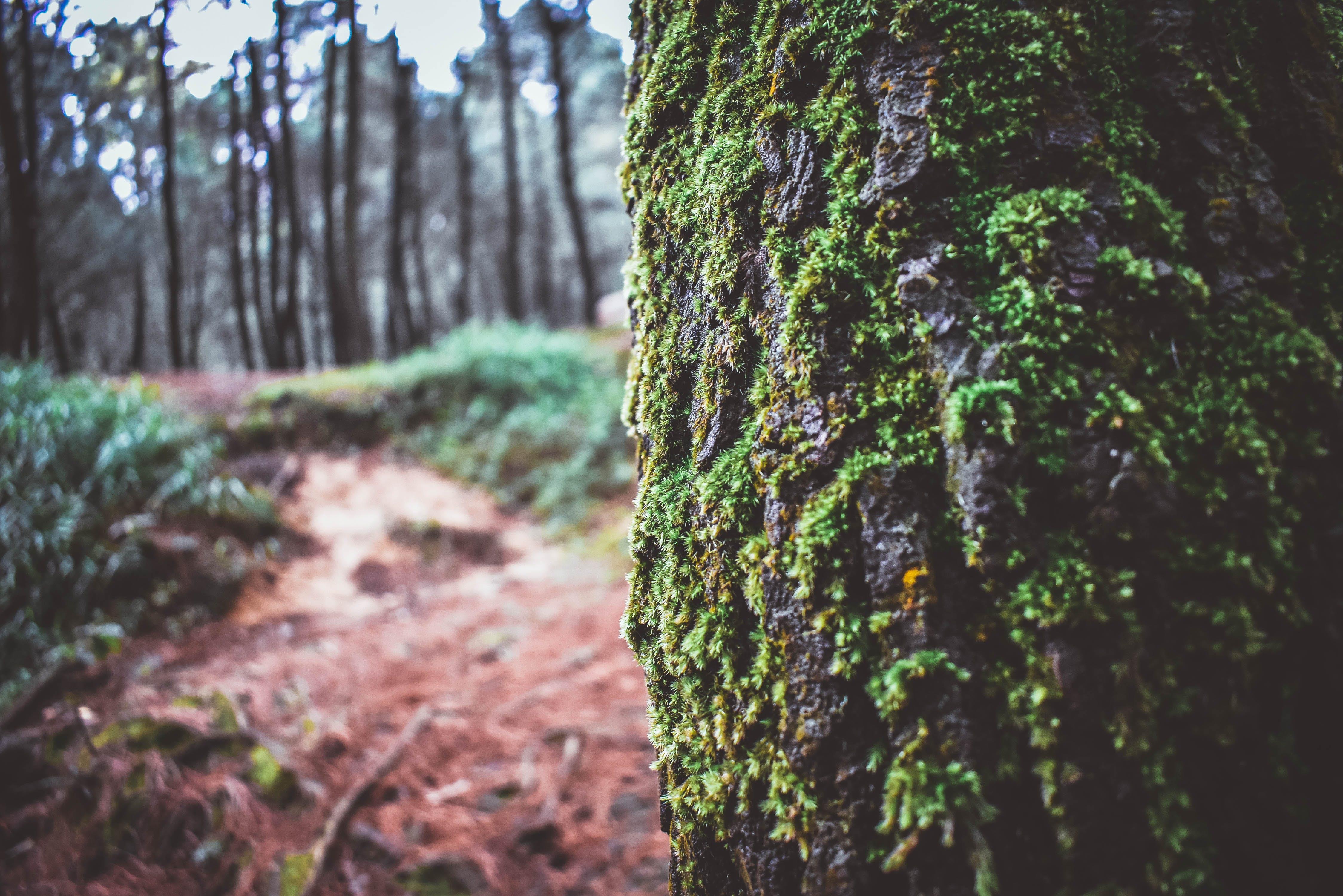 Δωρεάν στοκ φωτογραφιών με δασικός, φύση, φωτογραφία