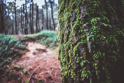 Free stock photo of forest, nature, photography