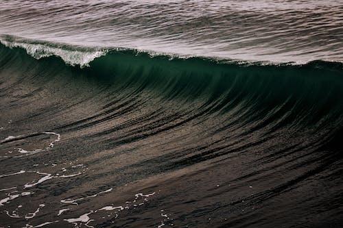 招手, 海洋 的 免费素材照片
