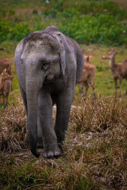 Fotos de stock gratuitas de bosque, bosque nacional, camino forestal, elefante