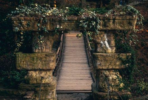 Gratis arkivbilde med gress, grønn, planter, stein