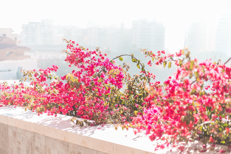 Gratis lagerfoto af bjerg, blomster, by, Smuk