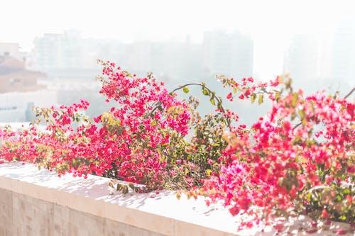 Fotobanka sbezplatnými fotkami na tému hora, krásny, kvety, mesto
