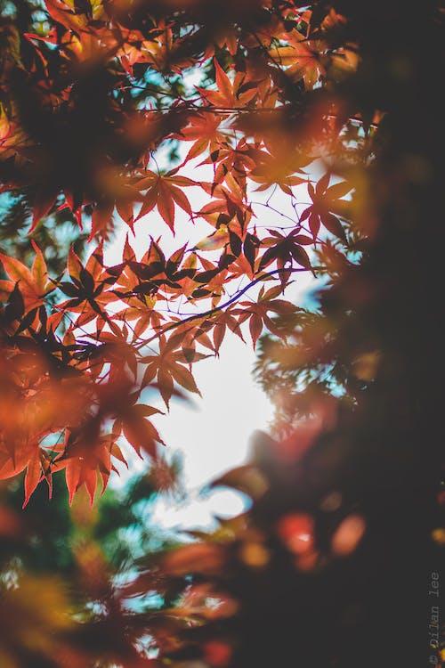 Immagine gratuita di ambiente, colori, concentrarsi, crescita