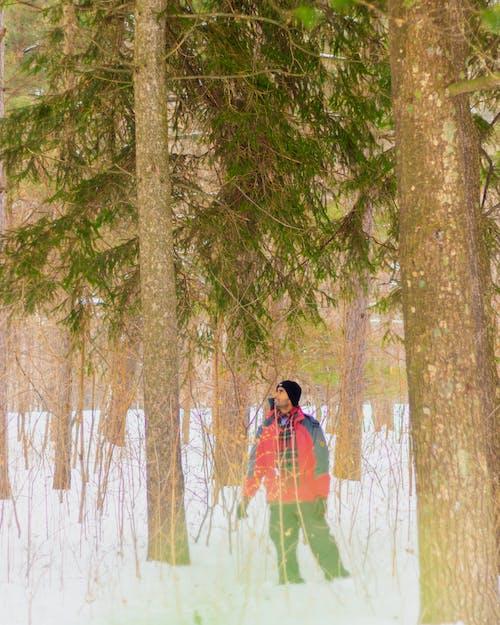 Бесплатное стоковое фото с дерево, заблудившийся, зима, лес