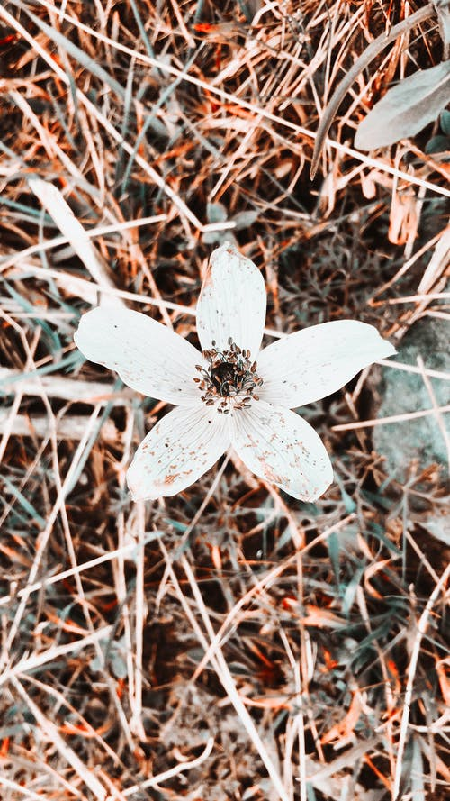 Darmowe zdjęcie z galerii z biały kwiat, fajna tapeta, iphone, iphone 6