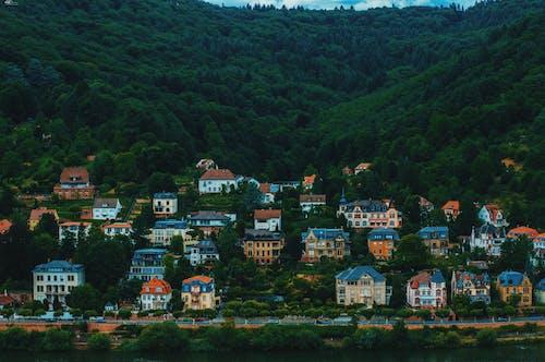 Foto profissional grátis de arquitetura, árvores, casas, cênico