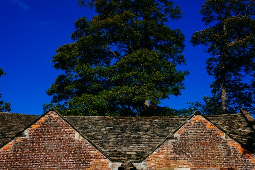 Δωρεάν στοκ φωτογραφιών με αγγλικά δρυς, αγρόκτημα, γαλλική βελανιδιά, δέντρα