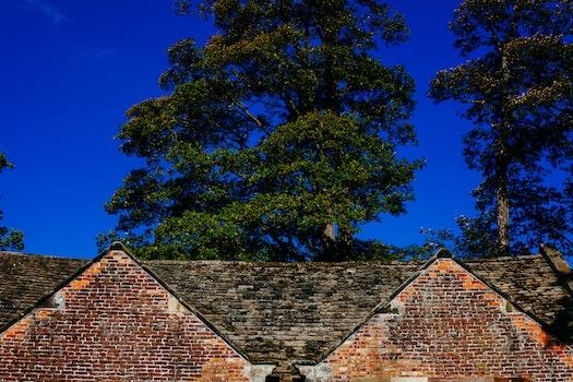 Free stock photo of trees, house, farm, rural